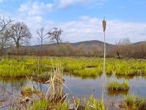 在沼泽的银行的春日 免版税库存照片