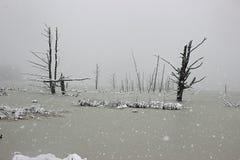 在沼泽的雪 图库摄影