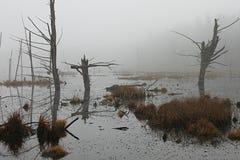 在沼泽的雾 免版税库存照片