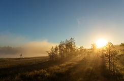 在沼泽的黎明 免版税库存图片