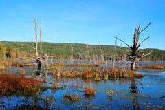 在沼泽的Autum 库存图片