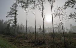 在沼泽边缘的树反对在雾的遥远的木头 图库摄影
