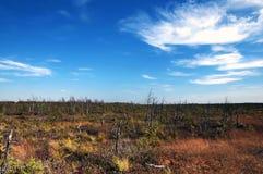 在沼泽附近的白俄罗斯大欧洲langs米斯&#208 免版税库存图片