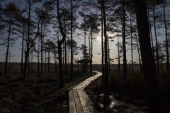 在沼泽,早期的春天,拉脱维亚, Dunika的木人行桥 免版税库存图片