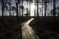 在沼泽,早期的春天,拉脱维亚, Dunika的木人行桥 免版税图库摄影