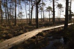 在沼泽,早期的春天,拉脱维亚, Dunika的木人行桥 库存图片