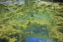 在沼泽水池的蓝天反射 免版税库存照片
