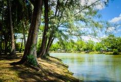 在沿河的树荫之下 库存图片