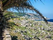 在沿海岸区的一棵棕榈树在意大利 免版税库存照片