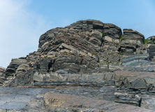 在沿海峭壁的北花 库存图片
