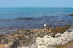 在沿海礁石的孤独的海鸥在风平浪静背景  图库摄影