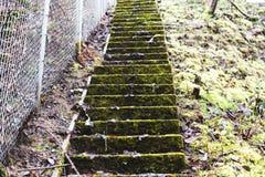 在沿着Chainlink篱芭的青苔盖的楼梯 免版税库存图片