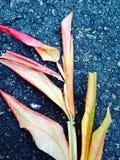 在法国采取的植物 免版税库存照片