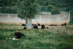 在法萨诺apulia的意大利徒步旅行队动物园里负担 库存图片