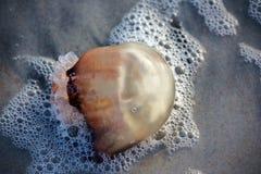 在泡影的水母 库存照片