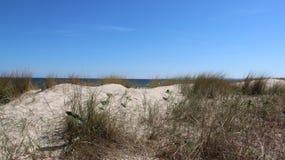 在波儿地克的海边的风景看法与丛在边疆的草 库存图片
