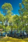 在波兰河沼泽结构树附近的narew 库存照片