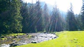 在波兰Tatra山的一条冲的山小河 免版税库存图片