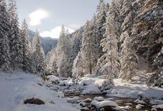 在波兰Tatry山的太阳 免版税库存照片