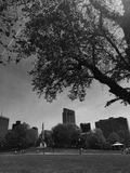 在波士顿共同性的树 库存照片