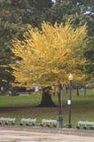 在波士顿共同性的秋叶 免版税库存照片