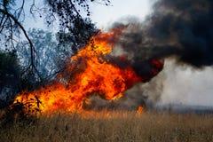 灼烧的森林 免版税库存图片