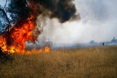 灼烧的森林 免版税库存照片