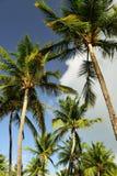 在波多里哥海滩的热带棕榈树 库存图片