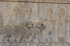 在波斯波利斯古城的墙壁上的符号安心 图库摄影