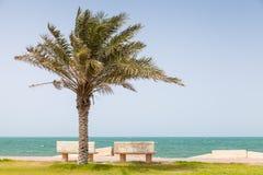 在波斯湾,沙特阿拉伯海岸的棕榈  免版税库存照片