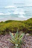 在波浪上的棕榈仙人掌 免版税库存图片