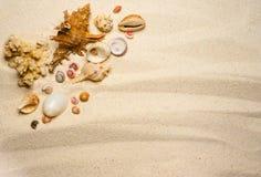在波浪沙子的壳 库存图片
