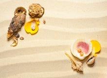 在波浪沙子的壳 免版税库存图片