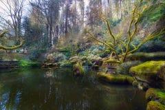 在波特兰日本人庭院降低池塘 免版税库存照片
