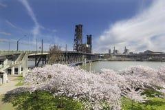 在波特兰江边的樱花 库存照片