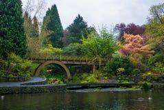 在波特兰` s克里斯特尔里弗杜鹃花加尔德角的一个木桥 库存照片