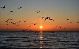 在波罗的海的明亮的日出和飞行海鸥在格丁尼亚,波兰 免版税库存图片