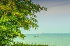在波罗的海的树 库存图片