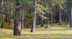 在波罗的海附近的杉树森林在Jurmala,拉脱维亚 库存图片