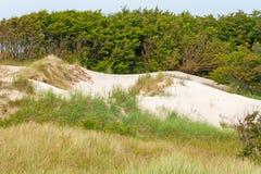 在波罗的海附近的沙丘 图库摄影