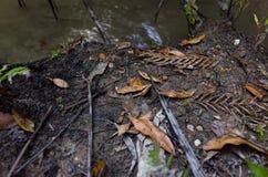 在泥泞的土壤的下落的叶子在水的边缘 库存照片