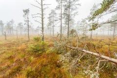在泥潭的下落的树 免版税库存图片