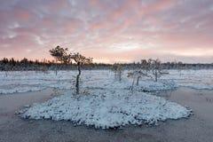 在泥潭的冬天日落 库存图片
