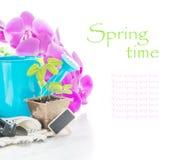 在泥煤罐、桃红色兰花花和蓝色浇灌的c的幼木 库存图片