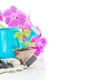 在泥煤罐、桃红色兰花花和蓝色浇灌的c的幼木 免版税库存照片