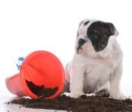 在泥的脏狗 免版税库存照片