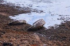 在泥的轮胎在岸 免版税库存图片