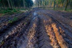 在泥的轮胎轨道 库存图片