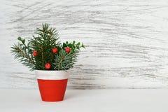 在泥罐的圣诞节安排 库存图片