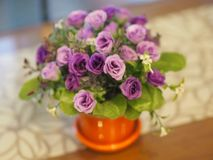 在泥罐的紫色玫瑰 库存照片